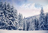 Fantastic winter landscape and blue sky. Creative collage. Beauty world.