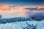 Fantastic evening winter landscape. Colorful overcast sky. Carpathian, Ukraine, Europe. Beauty world.