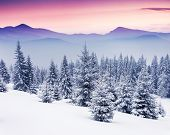 stock photo of snow forest  - Fantastic evening winter landscape - JPG