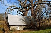 an old log cabin and cottonwood trees
