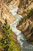Yellowstone river and gorge in Yellowstone National Park