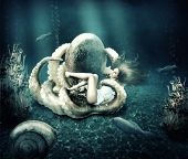 foto of octopus  - Fantasy underwater marine world - JPG
