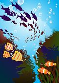 underwater world, coral reefs and colored fishes