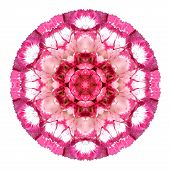 Kaleidoscopic Carnation Flower Mandala Isolated On White