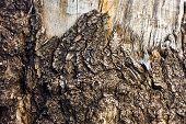 Dead Tree Bark