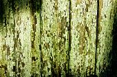 Green Cracky Texture