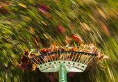 Motion Blur On Green Lawn Rake Leaves