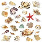Seashell collection on white.The high resolution detail photos with clipping path are to be found in my portfolio