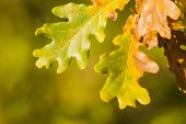Detail of autumn leaves