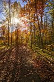 Sun shining through colorful leaves of autumn trees in fall forest and hiking trail at Algonquin Park, Ontario, Canada.