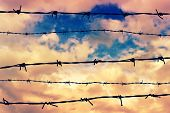 Silhouetted Barbed Wire