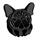 vector closeup portrait of the domestic dog French Bulldog