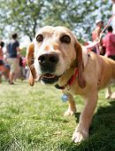 picture of spayed  - a cute mixed breed dog at a local park - JPG