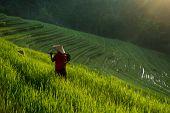 Farmer working on the terraced paddy field in Bali Island in the morning