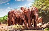 pic of veld  - Elephants at the small watering hole in Kenya - JPG