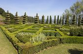 Topiary Landscaping in a Formal English Garden