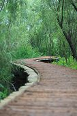 The Wood Bridge At Xixi Wetland Hangzhou China