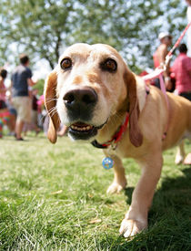 pic of spayed  -  a cute mixed breed dog at a local park  - JPG
