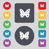 Butterfly sign icon. insect symbol. Set colourful buttons. Vector
