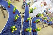 engineer working with flowers on conveyor belt,contemporary business