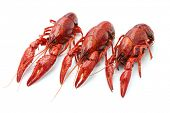 picture of crawfish  - crawfish isolated on white background - JPG