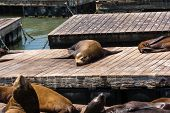 The sea lions sleeping on the piers