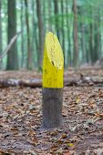 Painted Marking In A Dutch Forrest