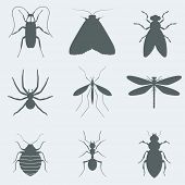 Vector illustration silhouettes of insects