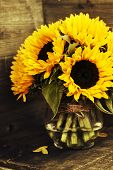 Beautiful fresh  Sunflowers in vase on wooden background