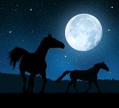 Silhouette of a horses in the night sky with the moon.