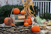 Pumpkins and corn on stones near a stone house