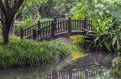Foot Bridge In Green Garden