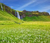 Selyalandfoss waterfall and picturesque flowering fields and streams. Iceland in July. Warm summer