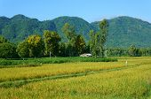 Vietnamese Village, Mountain, House, Paddy Field