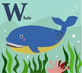 Animal alphabet for the kids: W for the Whale