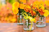 Autumn Tagetes