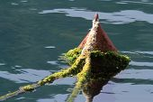 Old Red Buoy Covered With Algae In The Sea Close-up
