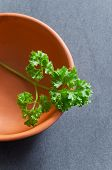 Curly Parsley In Ceramic Bowl
