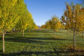 Beautiful Fall Morning On A Tree Lined Farm