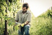Farmer in vineyard using laptop
