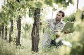 Farmer in vineyard using laptop