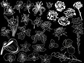 illustration with set of flowers sketches isolated on black background