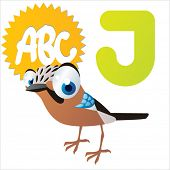 J is for Jay Bird