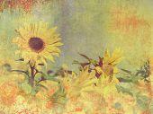 Retro sunflower field - vintage flower background