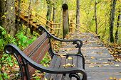 pic of banquette  - Photo of a bench with orange leaves in the forest - JPG