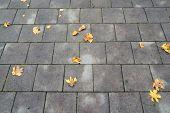 orange leaves on a stone road
