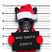 picture of caught  - mugshot of a christmas santa bad dog - JPG