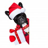 foto of beside  - Santa claus christmas dog wearing a hat with a xmas gift or present for you besides a white or blank placard isolated on white background - JPG
