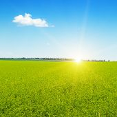 Beautiful Sunrise Over Wheat Field