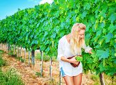 Happy cute young winemaker picking big bunch of ripe grapes into the hat, Italian wine production, autumn harvest season concept